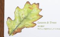 紅葉の季節にぴったり!木の葉のレターセット - ブルーベルの森-ブログ-英国のハンドメイド陶器と雑貨の通販