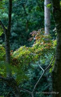 油山市民の森公園・・・ - ショーオヤジのひとり言