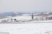 かしわ園から雪景色を楽しむ~11月の美瑛 - My favorite ~Diary 3~