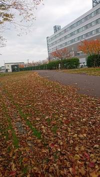 五稜郭病院へ - NPO法人セラピア函館代表ブログ セラピア自然農園栽培日記