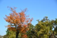鶴岡公園の紅葉・黄葉 - 「 ボ ♪ ボ ♪ 僕らは釣れない中年団 ♪ 」
