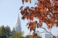 晩秋新宿御苑都庁と秋の彩り - 暮らしを紡ぐ