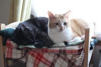 ネコあるある - ぎんネコ☆はうす