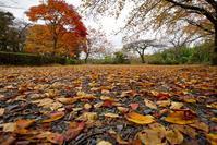 紅葉絨毯 - 四十の手習い 自転車と写真が好き