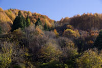 11月7日 今日の景色 - 日々GILIGILI