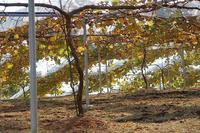 土作り終了 - 葡萄と田舎時間