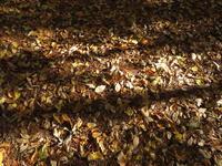 紅葉が始まった - 木の家具UMEKAWA くらしの話 ティオペペタイムス