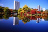 晩秋の中島公園 - 北国の花鳥風月