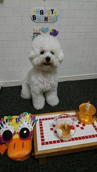 HAPPY BIRTHDAY ニコ♪ - いちご&ニコの photo 日記♪