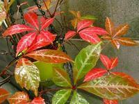 ウチの庭も秋の片鱗が・・・ - 花☆枯れました!