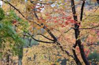 秋彩  - 風の彩り-2