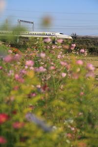 フォトジェニックな気分 - 新幹線の写真