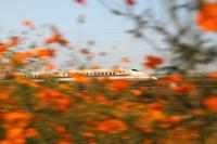 オレンジ - 新幹線の写真