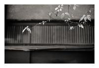 Leaf#22 - VELFIO
