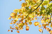北山植物園の紅葉 - シャドーボックス作品集