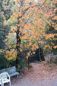 凍結肩その後と秋色の庭、イタリア ペルージャ - イタリア写真草子 Fotoblog da Perugia Umbria