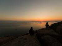 夕陽の見える丘 - 花と小鳥の図鑑風