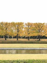 ★昭和記念公園★ - 気ままに・・・