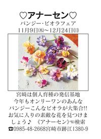 アナーセン  パンジー・ビオラフェア2017 - 宮崎の花屋 アナーセン