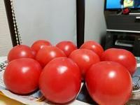 「トマト」 - そーすっこ