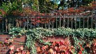落ち葉の季節となりました🍁🍂 - 自然の食卓 ブログ