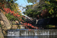 夙川へ - おはよう おはる!