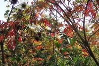 トライやるとアガベの成長記録2 - 手柄山温室植物園ブログ 『山の上から花だより』