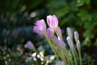秋の花 - Imagine