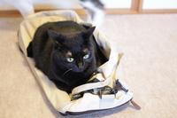 黒猫の白いヒゲ  - きょうだい猫と仲良し暮らし