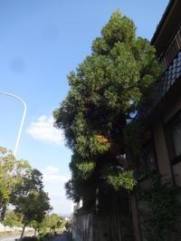 杉の枝の思い出 - がちゃぴん秀子の日記