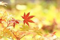 秋色さがし・1 - 暮らしの中で