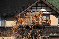 里山の秋 - 晴れ時々そよ風