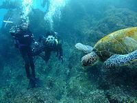 初めてダイビングも、楽勝なり~\(^o^)/ - 八丈島ダイビングサービス カナロアへようこそ!