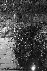 雨降りな午後に 8 - 気ままにお散歩