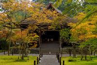 京都の紅葉2017 三千院(往生極楽院編) - 花景色-K.W.C. PhotoBlog