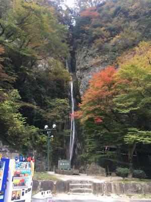 岡山県新見市 - たかで たまるか!