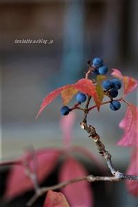 実りの秋 - そのままでいいよ。。。