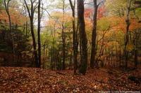 ミタライの森雨は降り続く・・・ - ratoの山歩き
