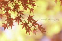 **美人な紅葉** - こころいろ*photo