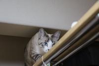 ネズミ落とし - ぎんネコ☆はうす