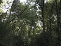 森の2 - 庭日和