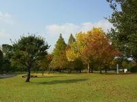 秋ですね - 風の吹くまま