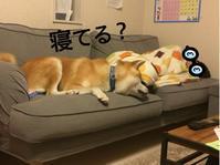 分かりやすい性格 - 犬との穏やかな日々
