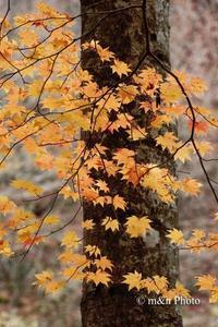 晩秋の裏磐梯へ6 - 季節のおくりもの