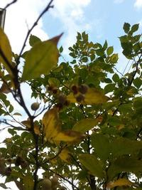 今日の庭花 庭花便り⑦エゴノキ - haru* flower -ハンドメイド日和-  ペーパーフラワーで作るオリジナルアクセサリー 掲載中
