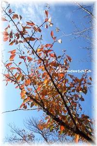 Autumn leaves  & English lesson 11.10 - 日々楽しく ♪mon bonheur