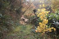 紅葉の森 - 宮迫の! ようこそヤマボウシの森へ