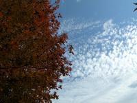 木の下で見上げる空の秋集め - 菓子と珈琲 ラランスルール 店主の日記。
