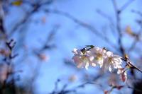冬桜 - きずなの家