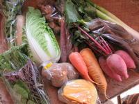 今週の野菜セット11月2週目とさつまいもが・・・。 - まるみど農園のあれこれ日記